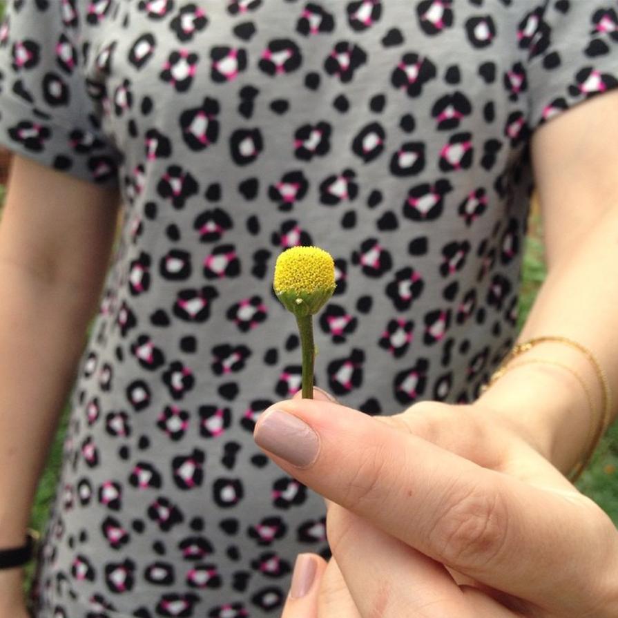 flor-jambu-fazenda-maria