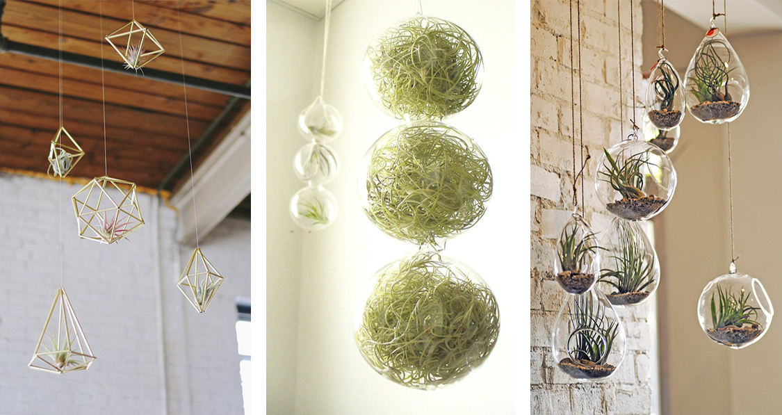 air-plants-na-decoracao-da-casa-dani-noce-3