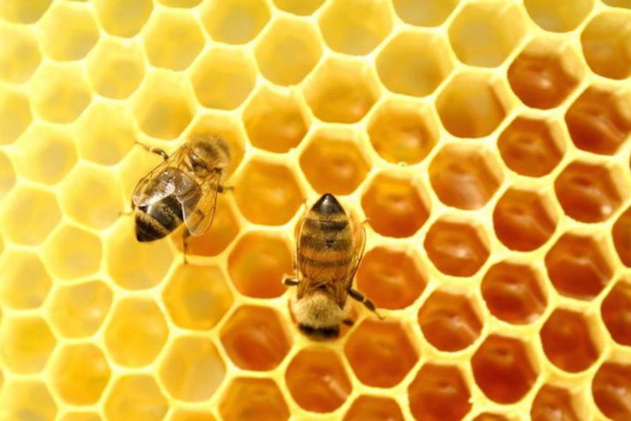 Sem abelhas, sem alimentos