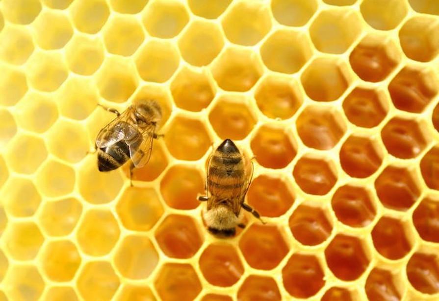 sem-abelhas-sem-alimentos-bee-or-not-to-be-danielle-noce-1