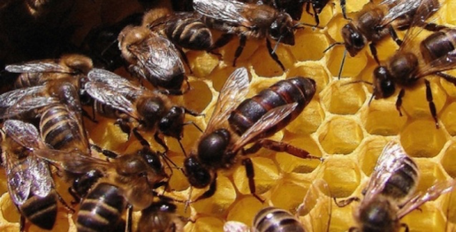 sem-abelhas-sem-alimentos-bee-or-not-to-be-danielle-noce-2