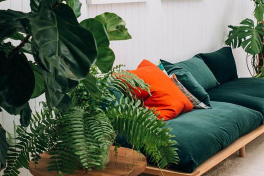 Salas com verde