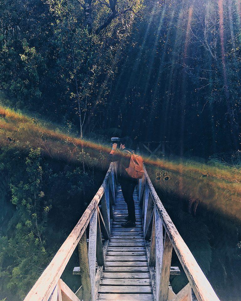 Parque Pumalín: conheça mais sobre o projeto de preservação ambiental | Carretera Austral | Patagônia Chilena