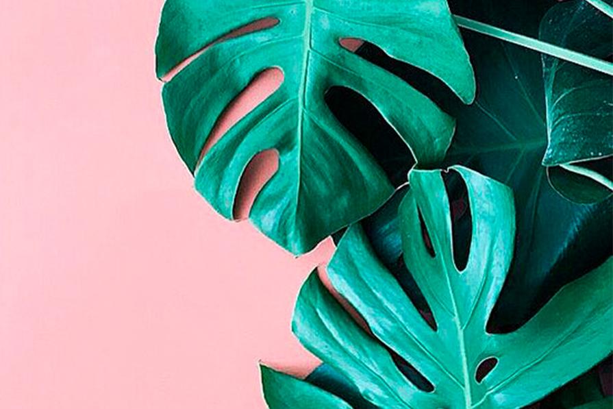 Tropical Vibes: saiba como usar a estampa de folhagem na decoração