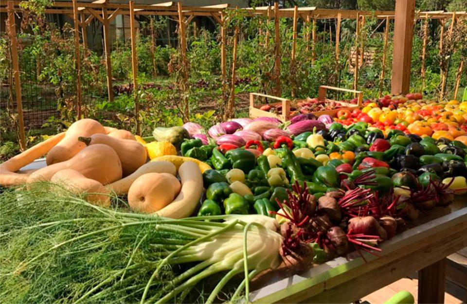 Hortas Orgânicas nos Terraços de Mônaco