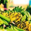 Tipos de banana: como identificar e utilizar cada variedade