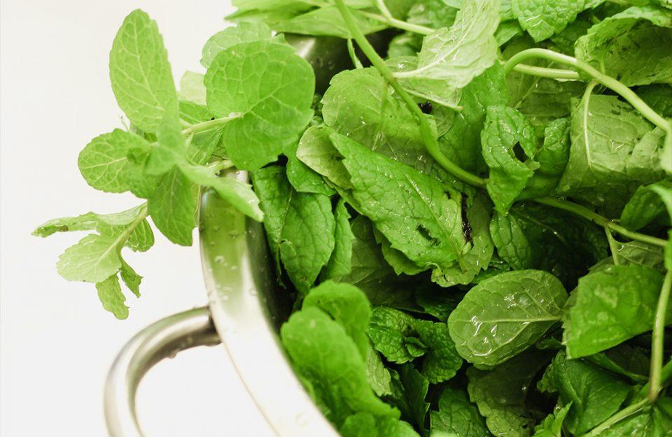 Tipos de temperos frescos ou ervas: para que servem + receitas
