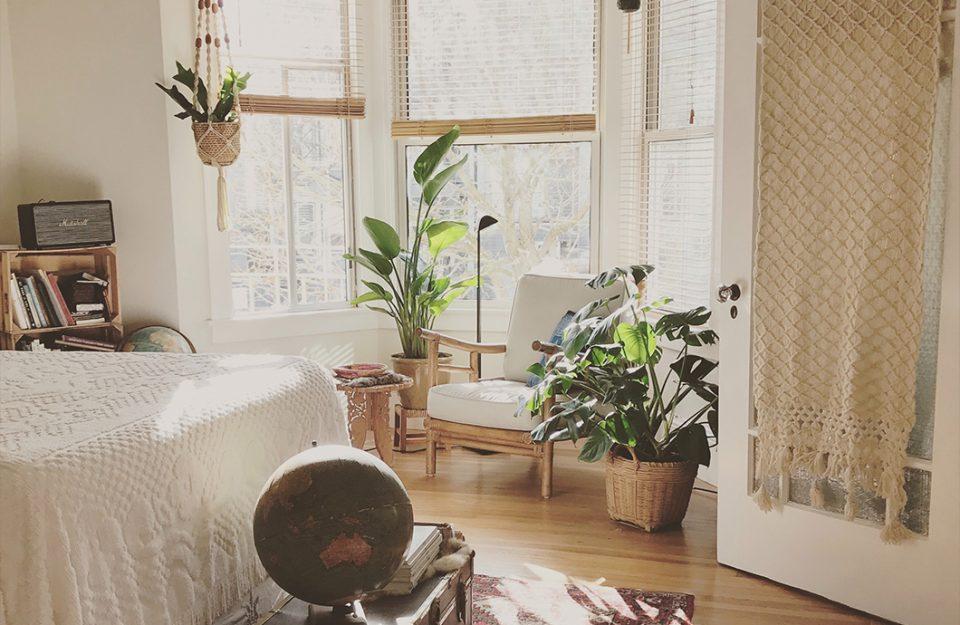 Faz mal ter plantas no quarto? Tudo que você precisa saber!