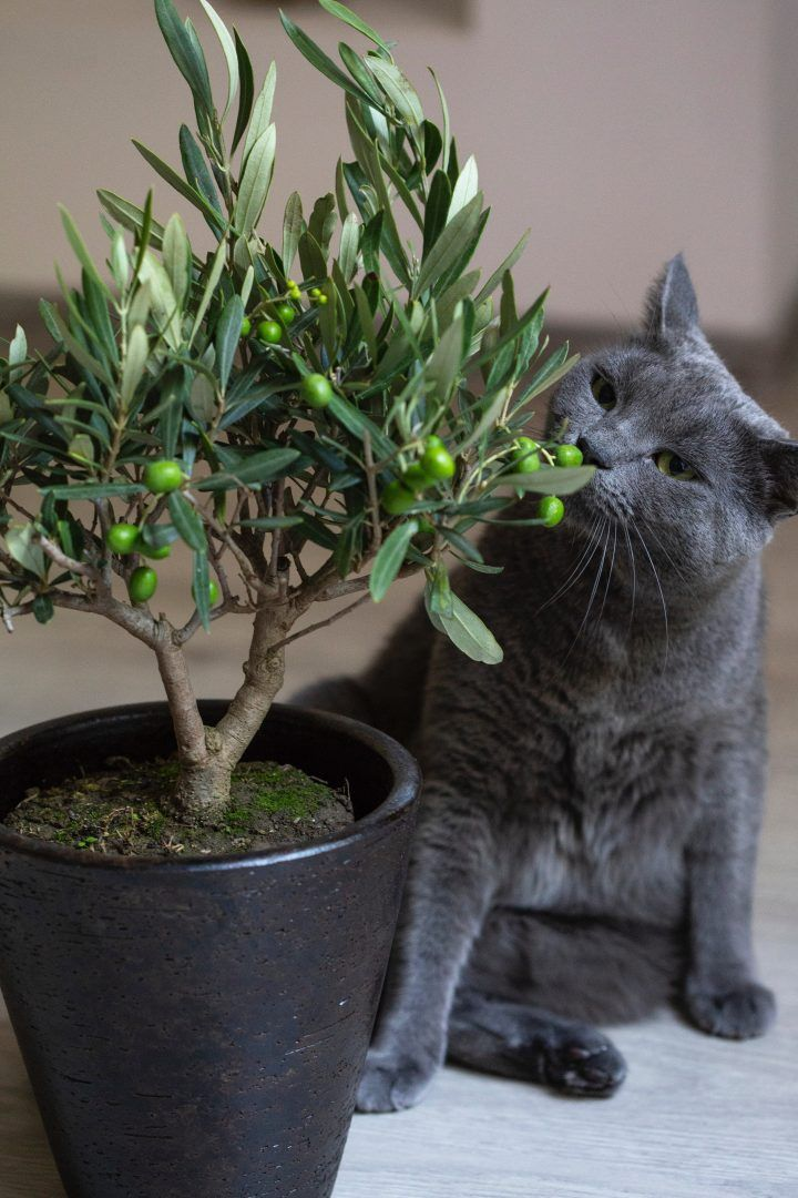 15 plantas tóxicas para cães e gatos e o que fazer para evitar