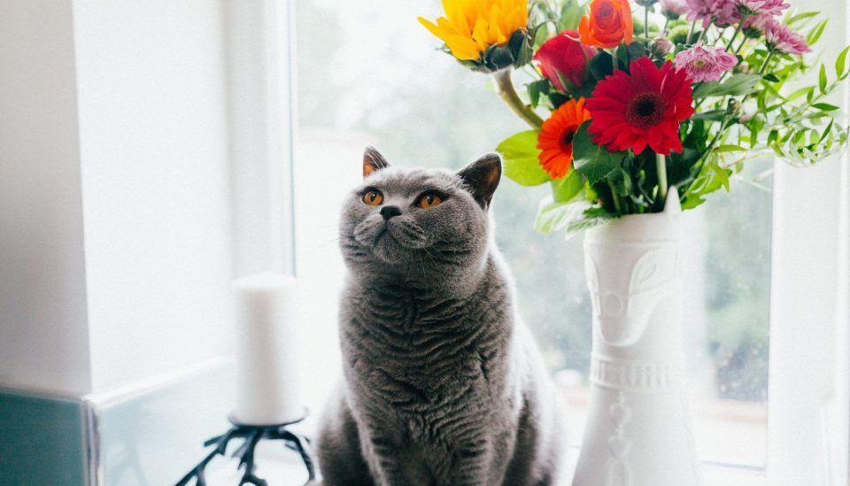 15 plantas tóxicas para cães e gatos e como tomar todos os cuidados