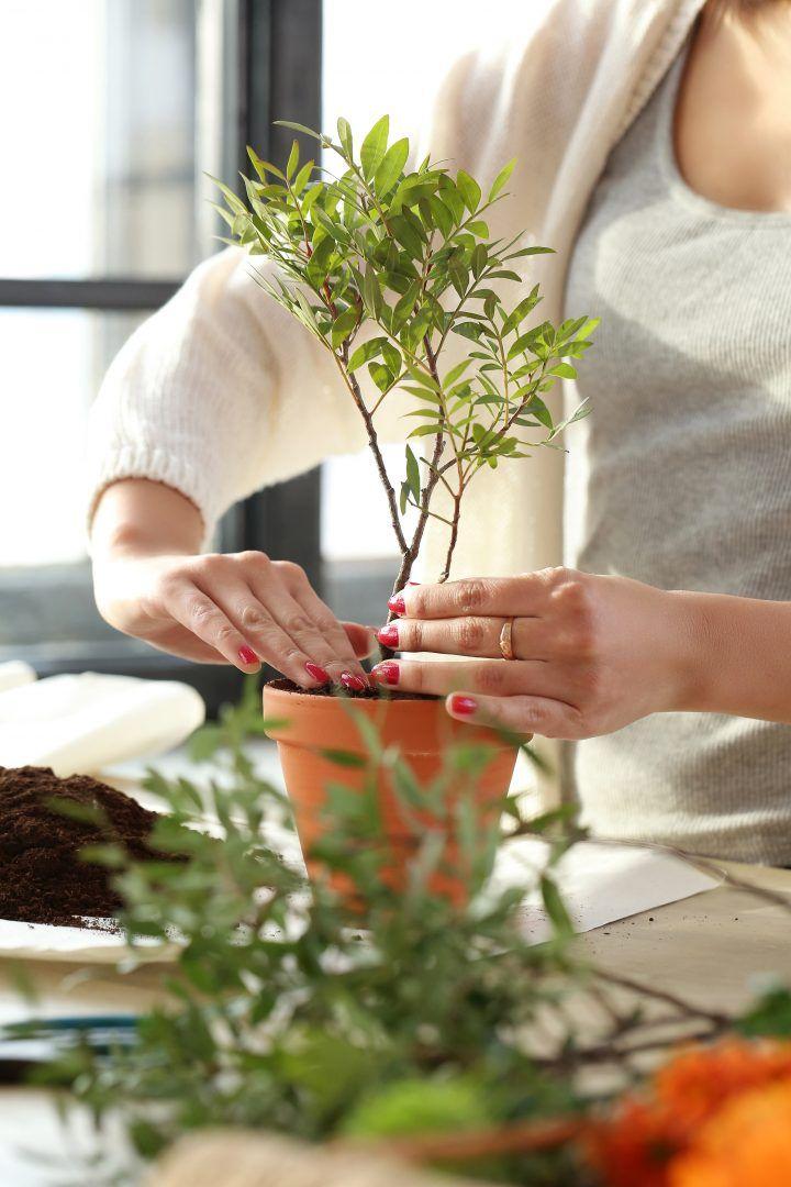 Materiais de jardinagem que você precisa ter antes de comprar plantas