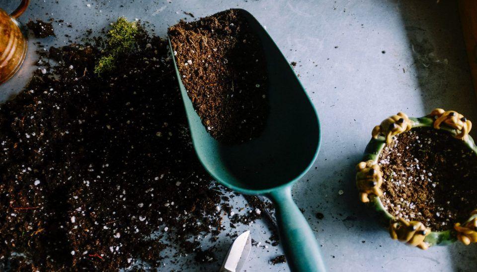Materiais de jardinagem que você precisa ter para cuidar das plantas