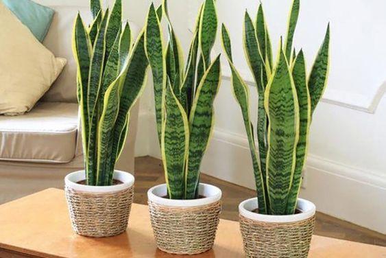 Plantas para colocar na porta de casa e atrair boas energias
