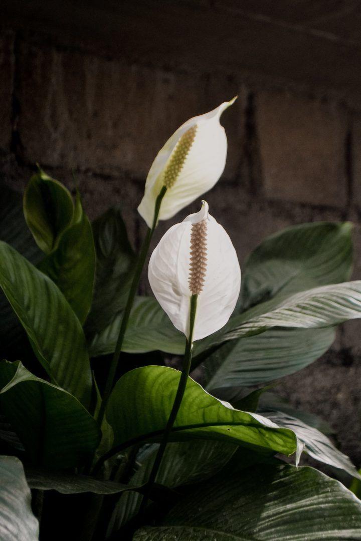 5 plantas que não precisam de sol para você cultivar em casa